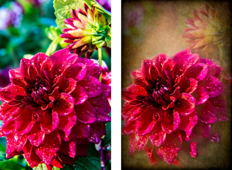 Original dahlia image (left) and dahlia with texture applied (right).