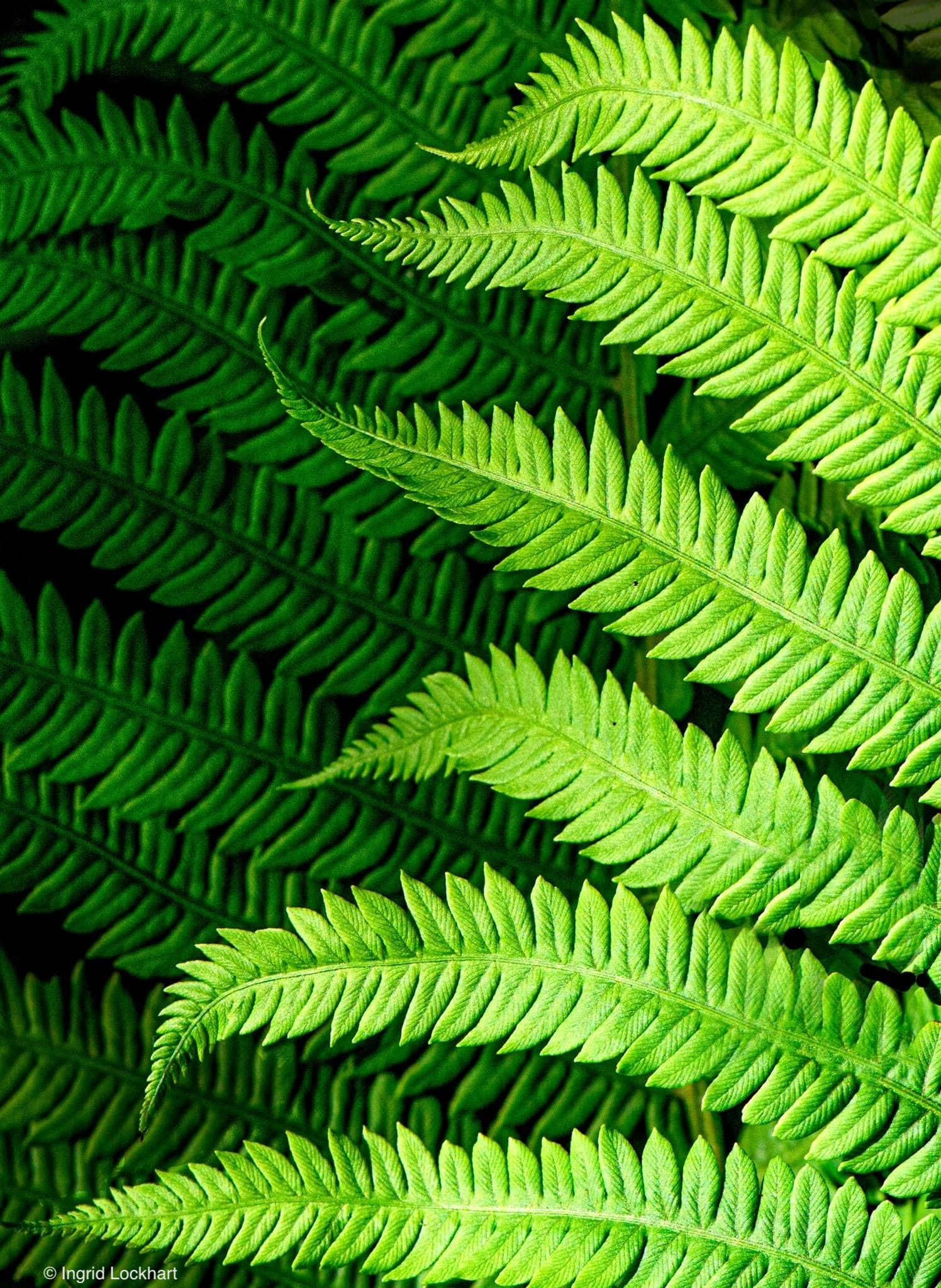 Macro photo of fern leaves in light and shadows