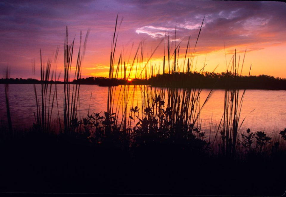 Spectacular sunset in the Florida lowlands.