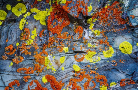 Photo of lichen on rock. Patches of Time, Glacier National Park, Montana, © Frank Gallagher
