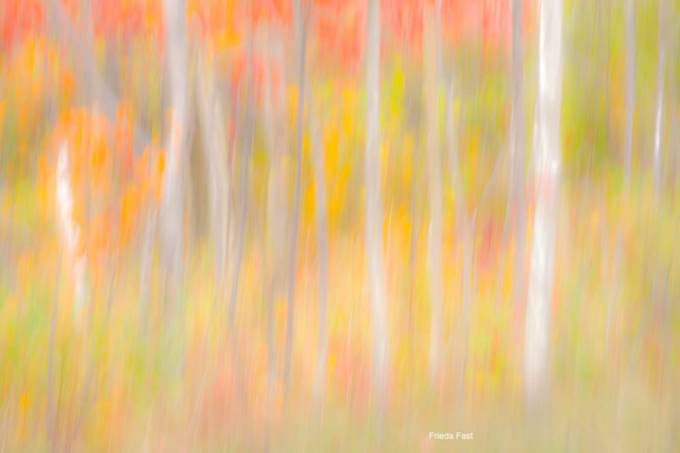 "Showcase 2020 Top 100 Winner: ""Motion Blur of Trees and Bushes, Grand Marais, Minnesota"" © Frieda Fast"