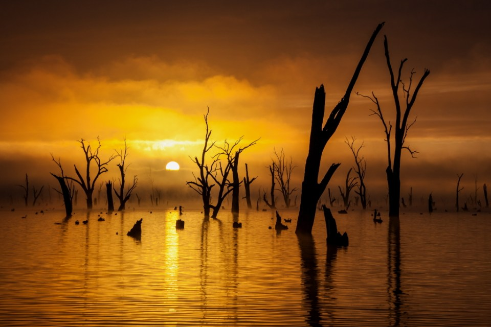 Foggy Morning Sunrise at Lake Mulwala, image by Garry Everett