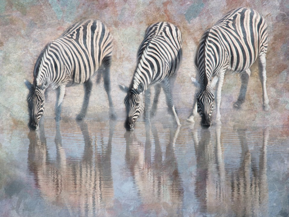Altered reality image of three Burchell's zebras at watering hole in Etosha National Park, Africa, by Marty Purdy