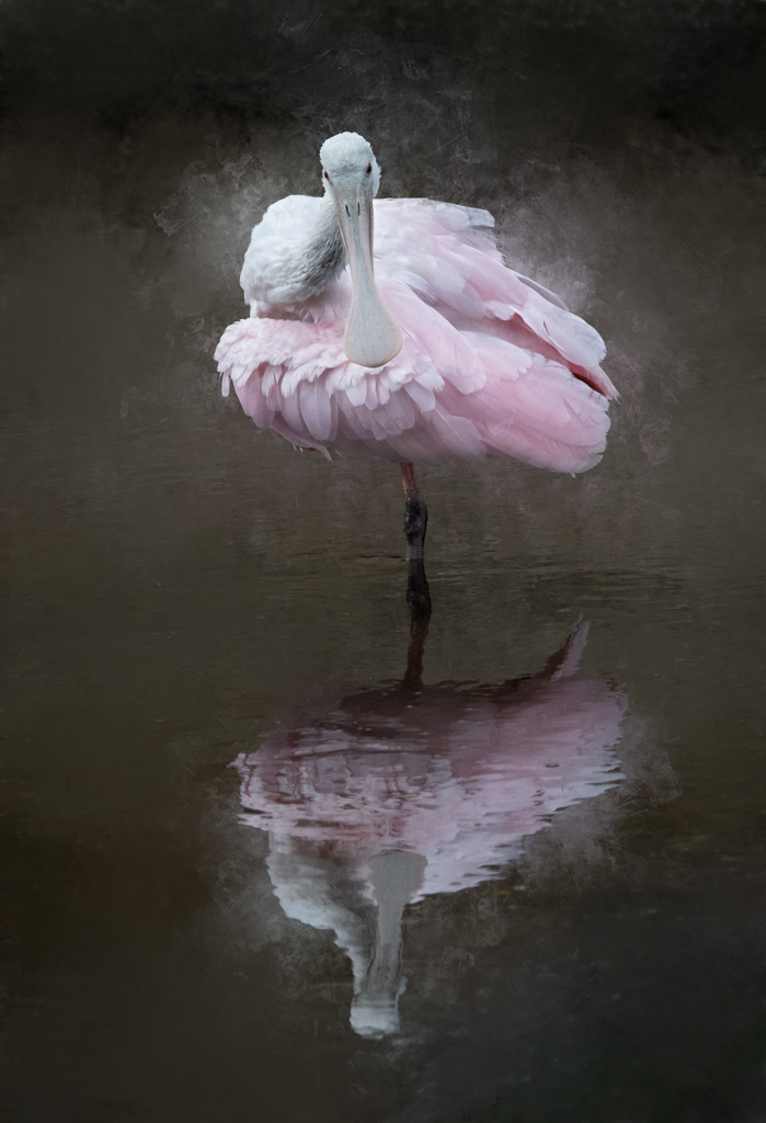 Altered reality image of a juvenile roseate spoonbill by Marty Purdy