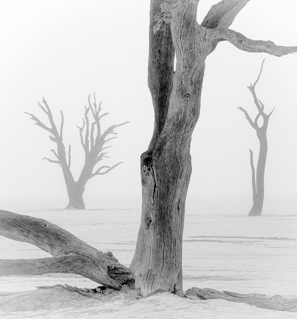 "Ancient Camel Thorn ""Ghost Trees"" and Fog, image by Wendy Kaveney"