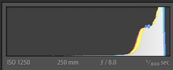 Histogram of NEF (Post-Processed RAW file)