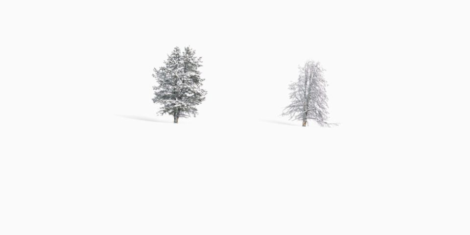 Photo of two trees in snow. Yellowstone Trees © Debbie McCulliss