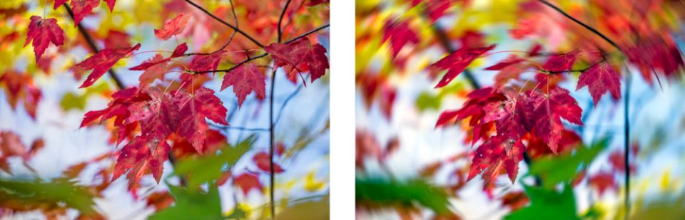 Left: Maple Leaves (Unaltered) and Right: Maple Leaves with Radial Blur (Spin Method) Applied © F. M. Kearney