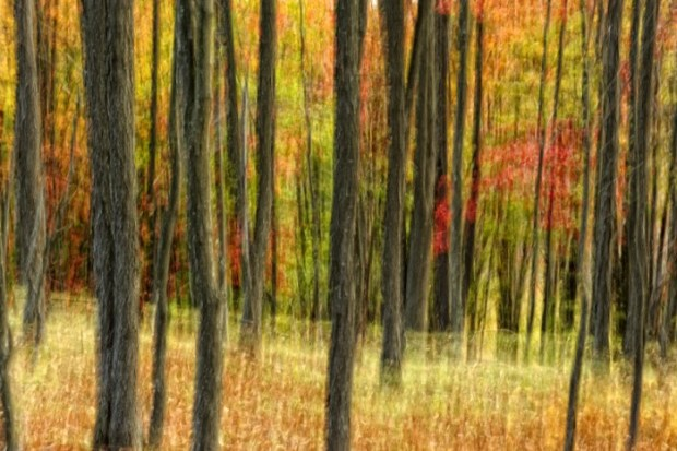 Autumn Forest, Canaan Valley National Wildlife Refuge, West Virginia. © Jim Clark