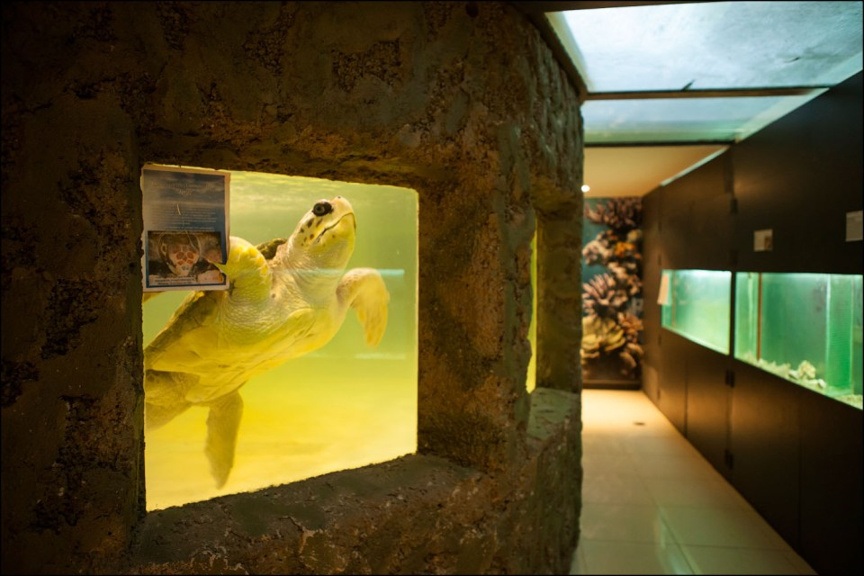 Captive - Sea Turtle © Gaston Lacombe