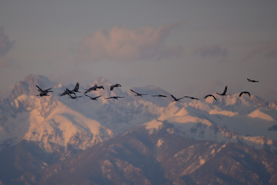 Greater Sandhills against backdrop of Sangre de Cristo Mountains, Monte Vista NWR, CO. © Mike Endres.