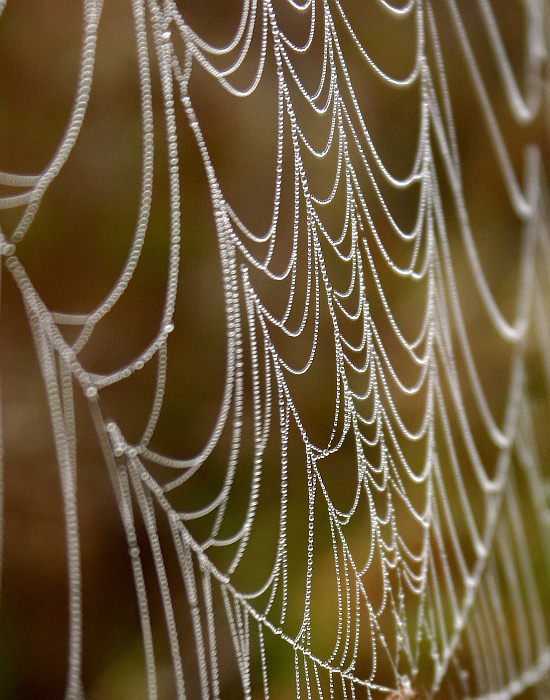 Dew-soaked web by Lana Gramlich