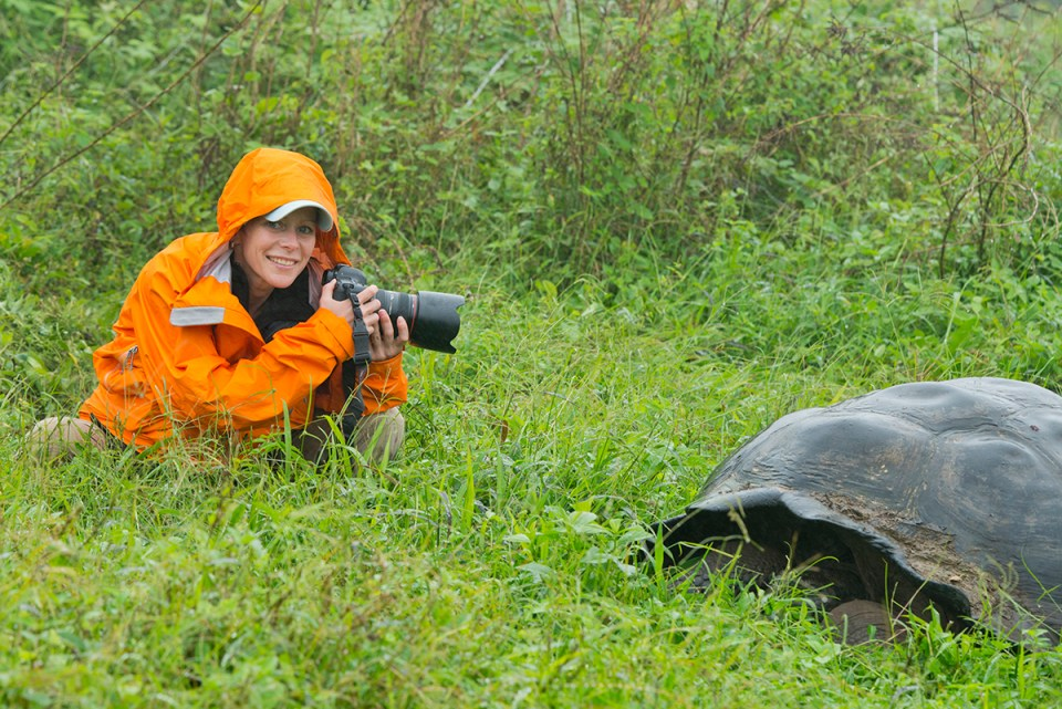 Ecuador, Galapagos. Santa Cruz highlands. Tourist with wild Galapagos dome-shaped tortoise (endemic sub-species: Geochelone nigrita). Photo by Cindy Miller Hopkins.