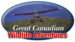 Great Canadian Wildlife Adventures 3 2015