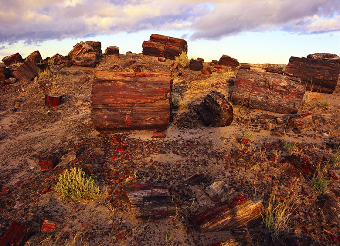 Petrified logs in Petrified Forest National Park, AZ. © Jerry Ginsberg