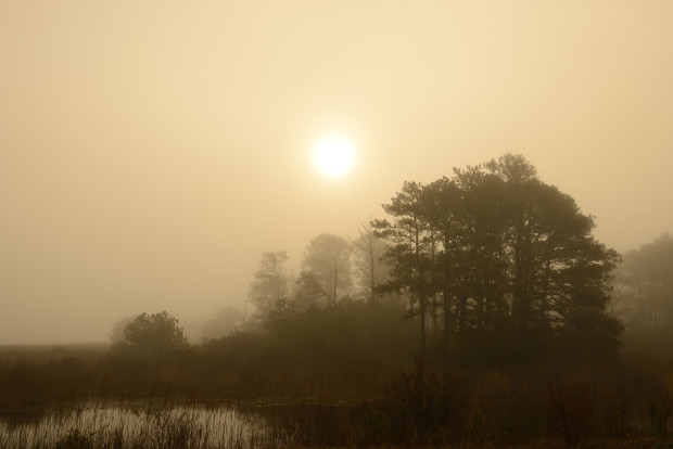 Spring morning, Chincoteague National Wildlife Refuge, Virginia. © Jim Clark