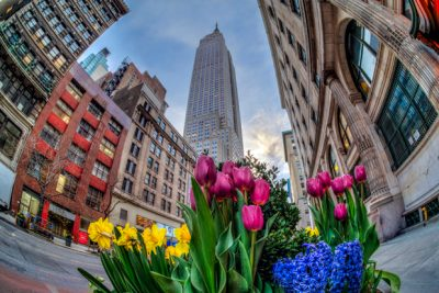 Tulip display near The Empire State Building New York, NY (HDR compilation of 5 images)