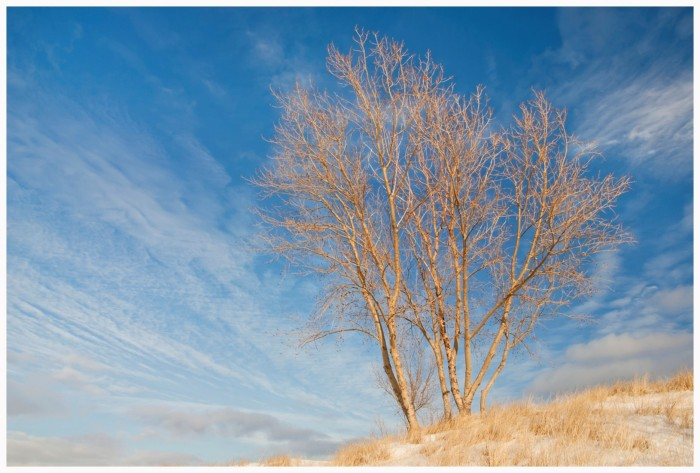 """Cottonwood Winter Sky"" © Hank Erdmann Lake Michigan Shore, Berrien County, Michigan (70-300mm zoom lens)"