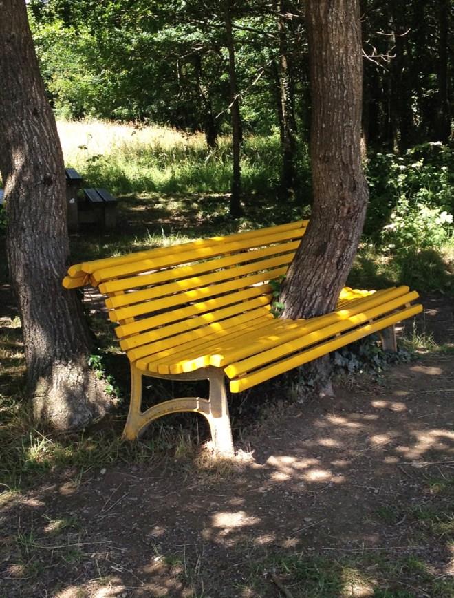 Le banc jaune traversé par un arbre
