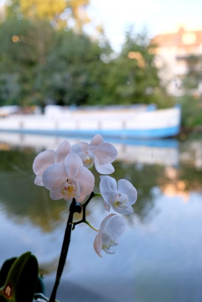 Les bateaux nantais : promenades et dîners-croisières sur l'Erdre à Nantes