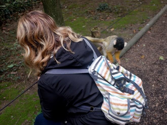 Singe en semi-liberté au zoo de la Boissière du Doré
