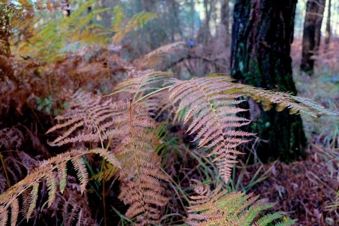 Forêt du Gâvre en Loire-Atlantique à 30 km de Nantes