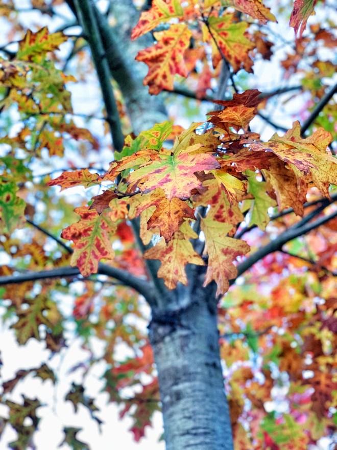 Couleurs d'automne à Nantes