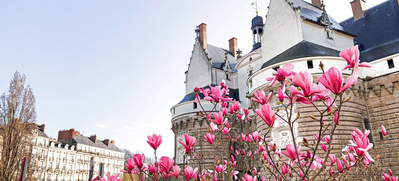 Nantes au printemps : les magnolias fleurissent autour du Château des Ducs de Bretagne