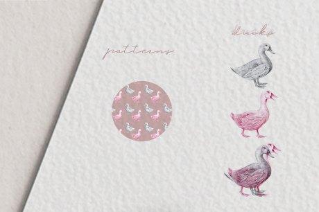 Hand drawn Ducks Illustrations