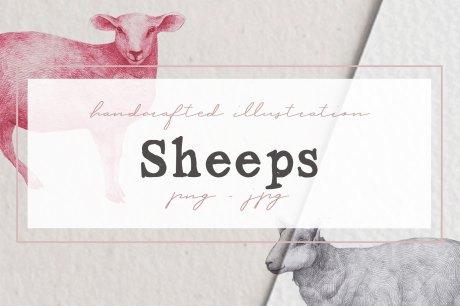 Hand drawn Sheeps Illustrations