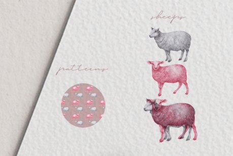 Hand drawn Sheeps Illustrations