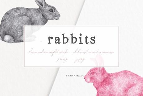 Hand drawn Rabbits Illustrations