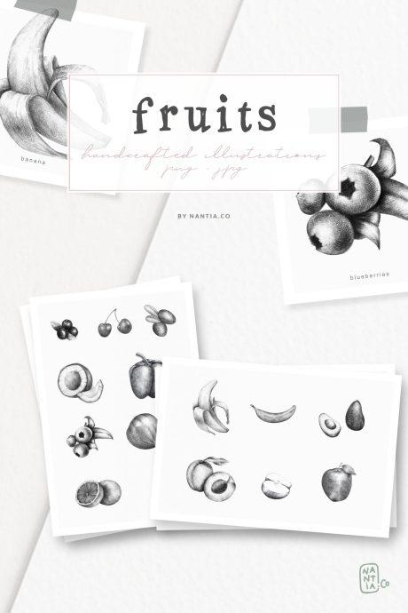 Handdrawn Fruit Illustrations