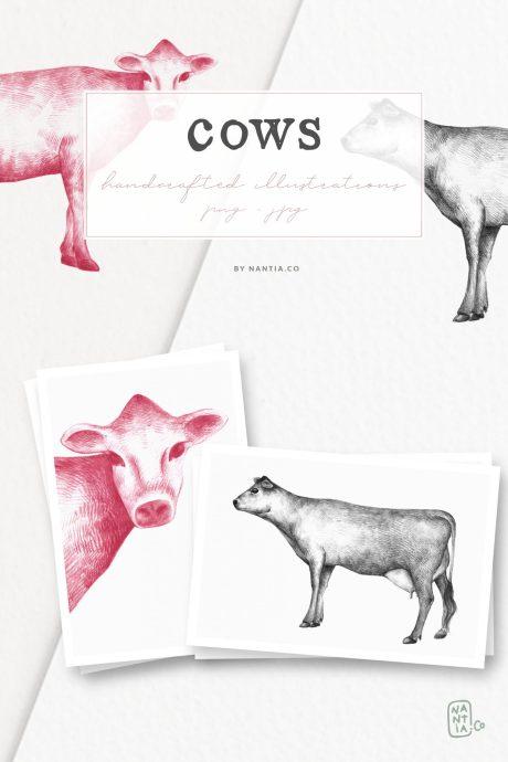 Hand drawn Cow Illustrations