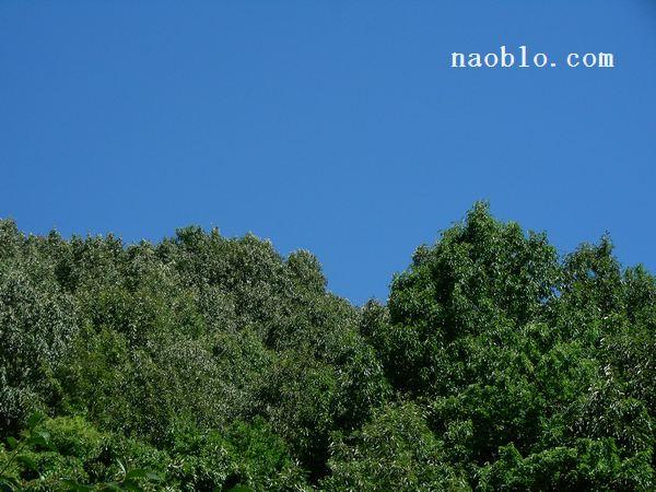 青い空の向こうで