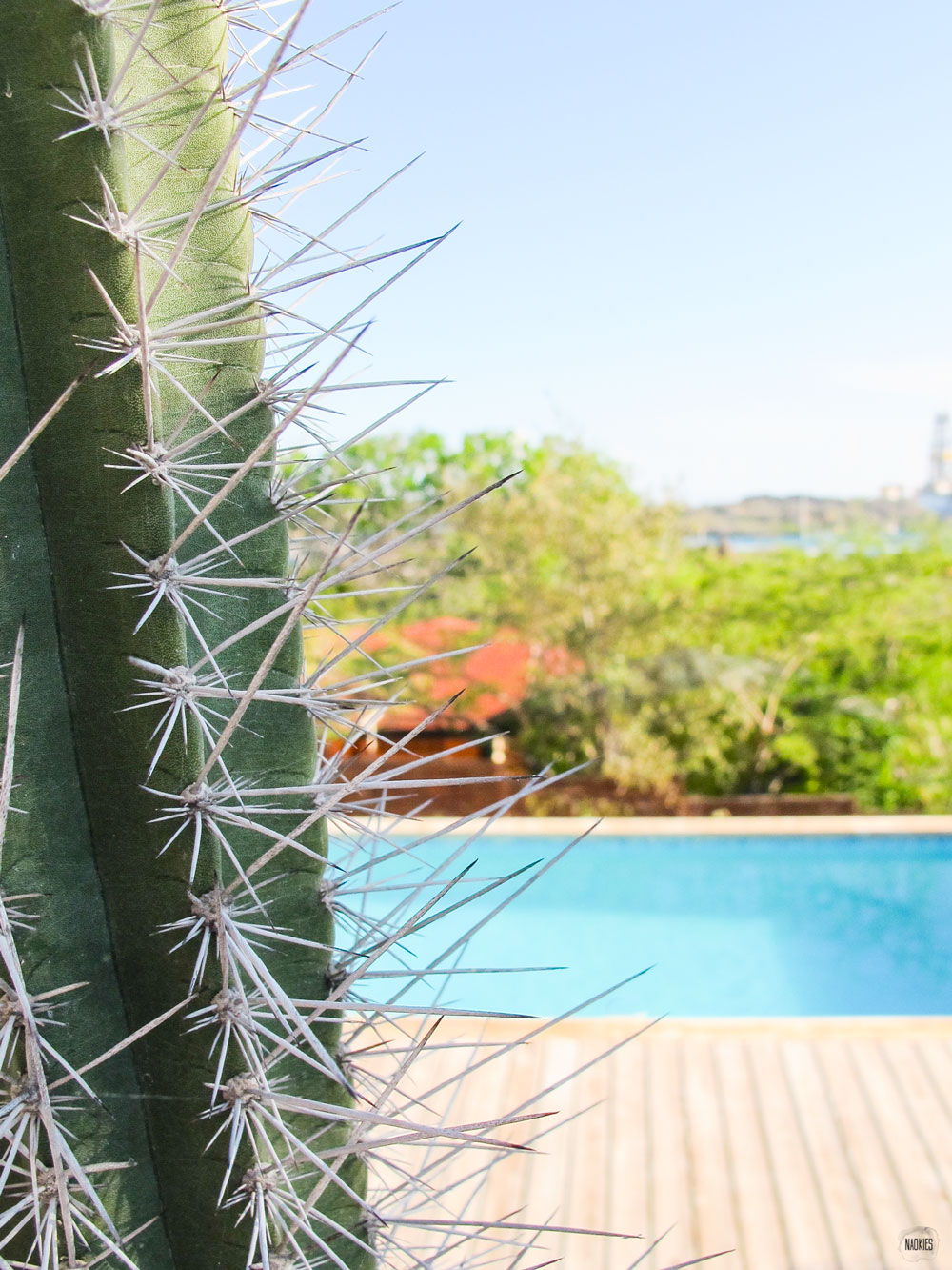 cactus ingezoomd zwembad ahtergron