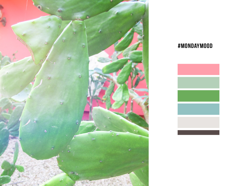 #mondaymood colorcard cactus mexico gren pink nature NAOKIES© Photography
