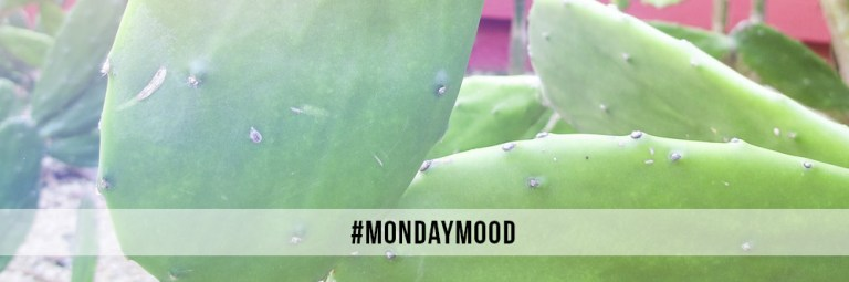 #mondaymood cactus mexico gren pink nature NAOKIES© Photography
