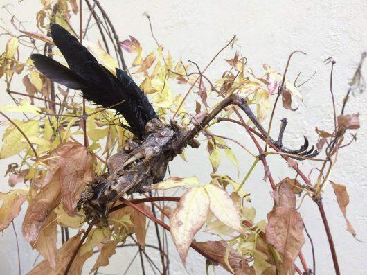 A bird corpse caught in a bush