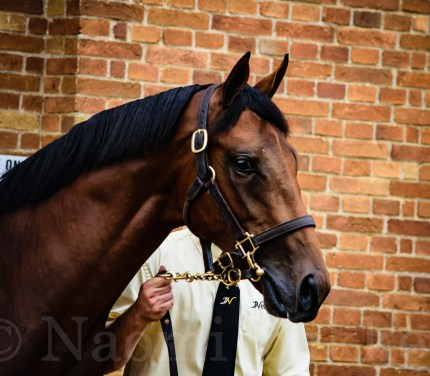 Dubawi (IRE) / Flawly (GB) colt 725 000 guineas