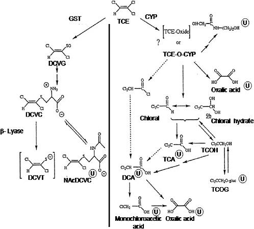 Assessing the Human Health Risks of Trichloroethylene: Key