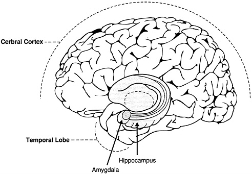 Hippocampus Function In Memory