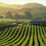 Yountville's hidden gems, its lessor know wineries