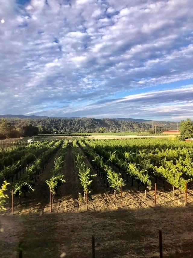 O Incrível Passeio pelo Napa Valley a Bordo do Trem (Wine Train) 5