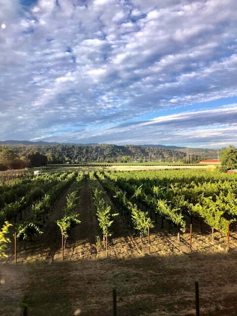 The Incredible Ride Aboard the Napa Valley Wine Train 6