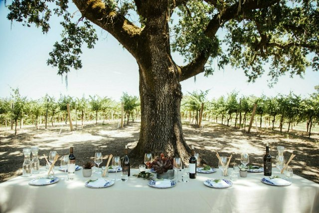 Picnic (Almoço) de Verão com uma Vista Espetacular na Vinícola Robert Young 9