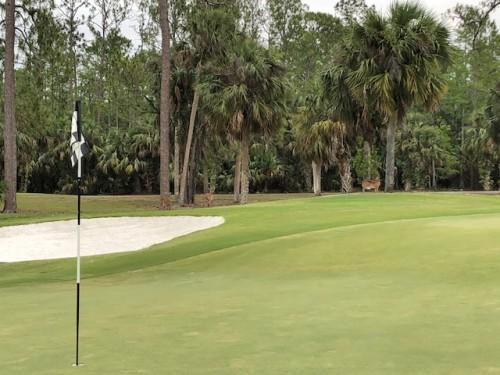 Bonita Bay Golf