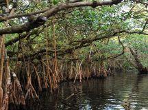 Everglades | Naples Grande Beach Resort | Naples, Florida