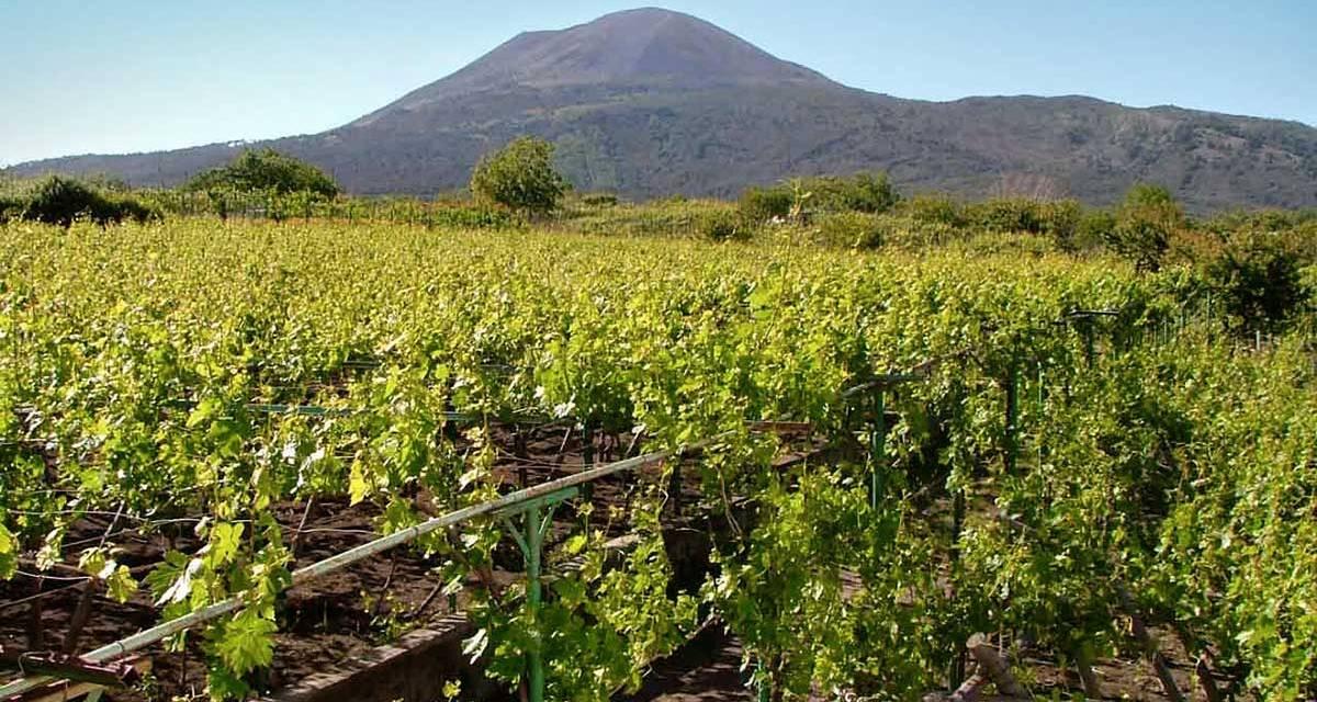 I Vini Campani, il Fiano, l'Aglianico