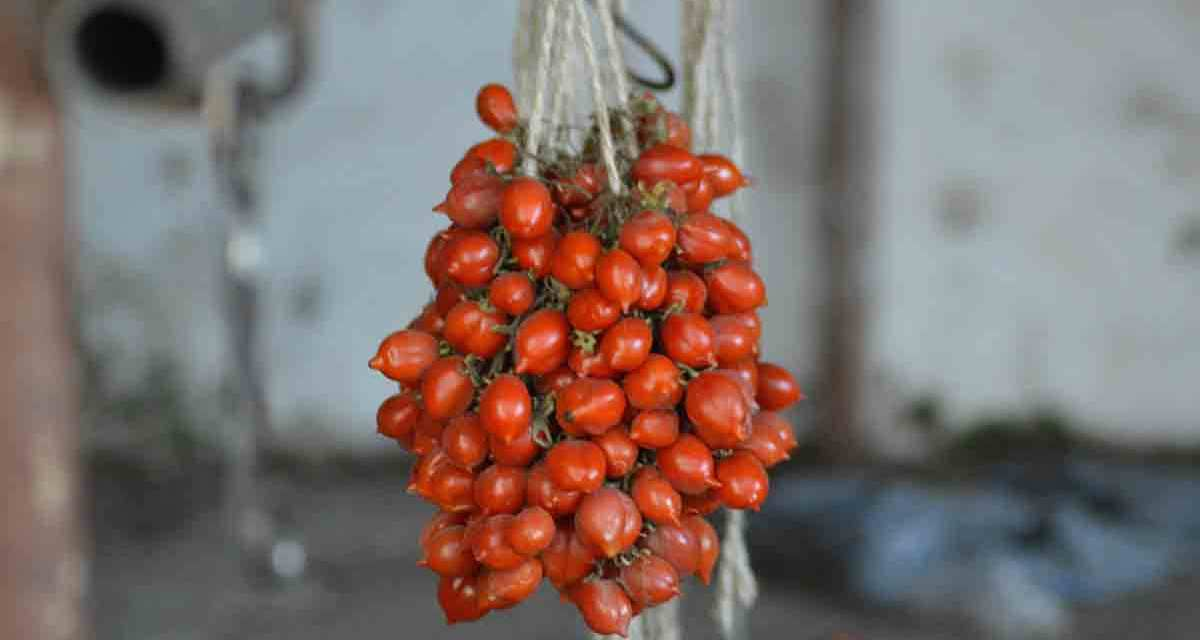 Pomodorino del Piennolo del Vesuvio